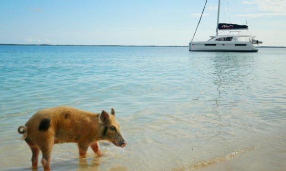 Charter-yachts-caribbean-7